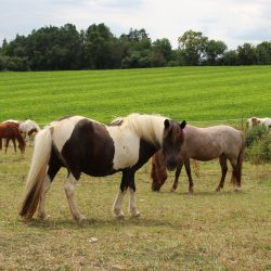 Heldensprünge_Höfe der Heldenreise_Urkraft der Pferde