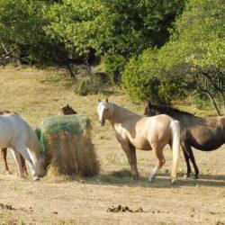 Bewusstes Reiten_Workshop zur Persönlichkeitsentwicklung_Horsemanship_Frankreich_heldenspruenge.de