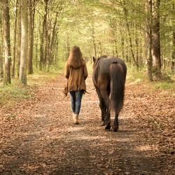 Vorwärtsgehen mit Pferd-Führung